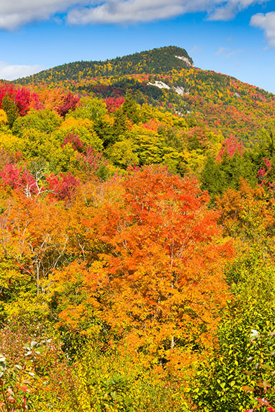 Autumn foliage on mountainside